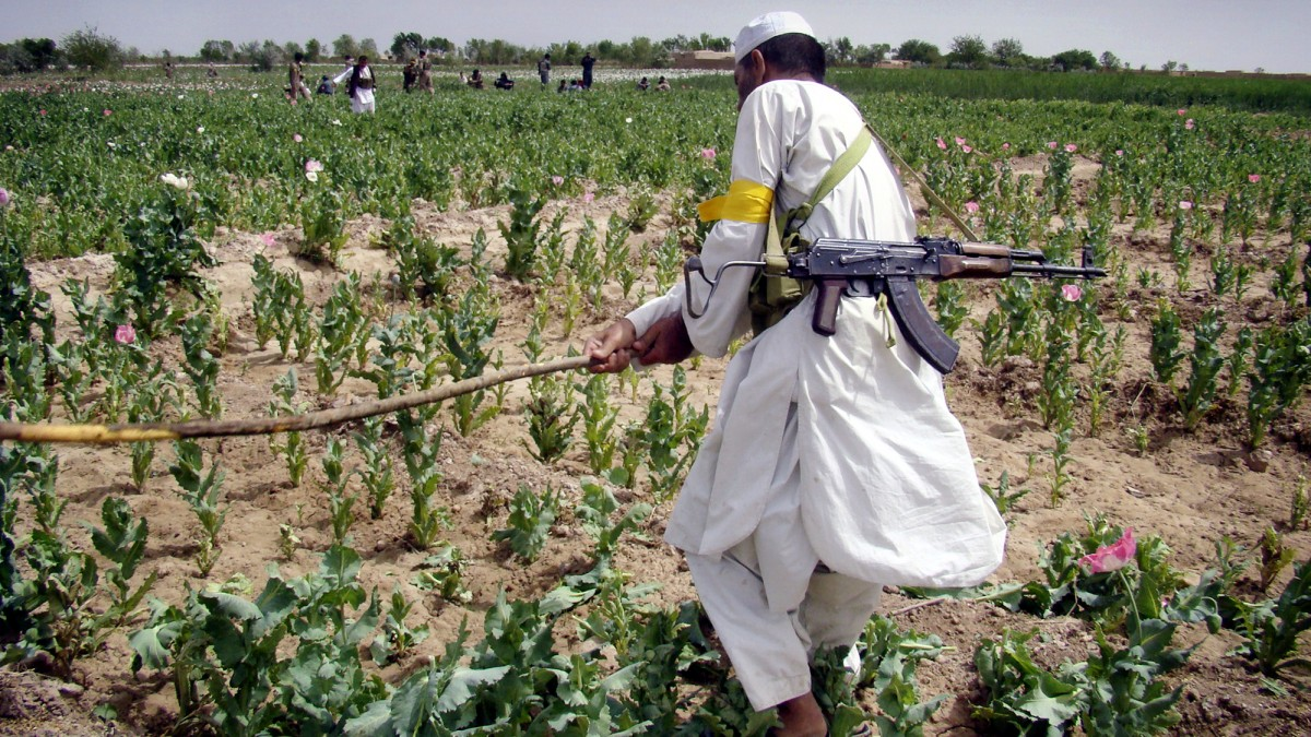 In this Friday, April 8, 2011 photo, an Afghan armed man member of the Afghan Public Protection Force destroys an opium poppy field during an eradication campaign in Marjah district, Helmand province of Afghanistan. Afghanistan supplies most of the world's opium. (AP Photo/Abdul Khaleq)