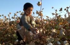 uzbekistan-child-labor-cotton-1-537x402