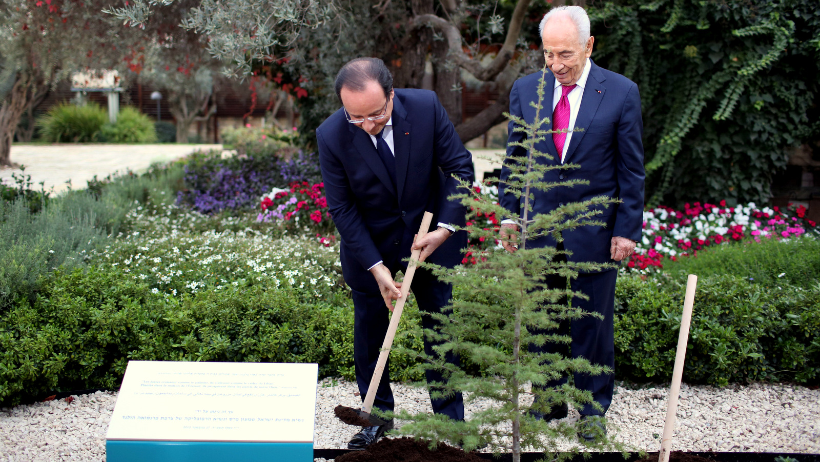Israeli President Shimon Peres, right, and French President Francois Hollande, plant a Cedar tree in Jerusalem. The National Lawyers Guild called for the investigation of the Jewish National Fund, an organization famous for planting tress on land forcibly seized from Palestinians. (AP/Abir Sultan)