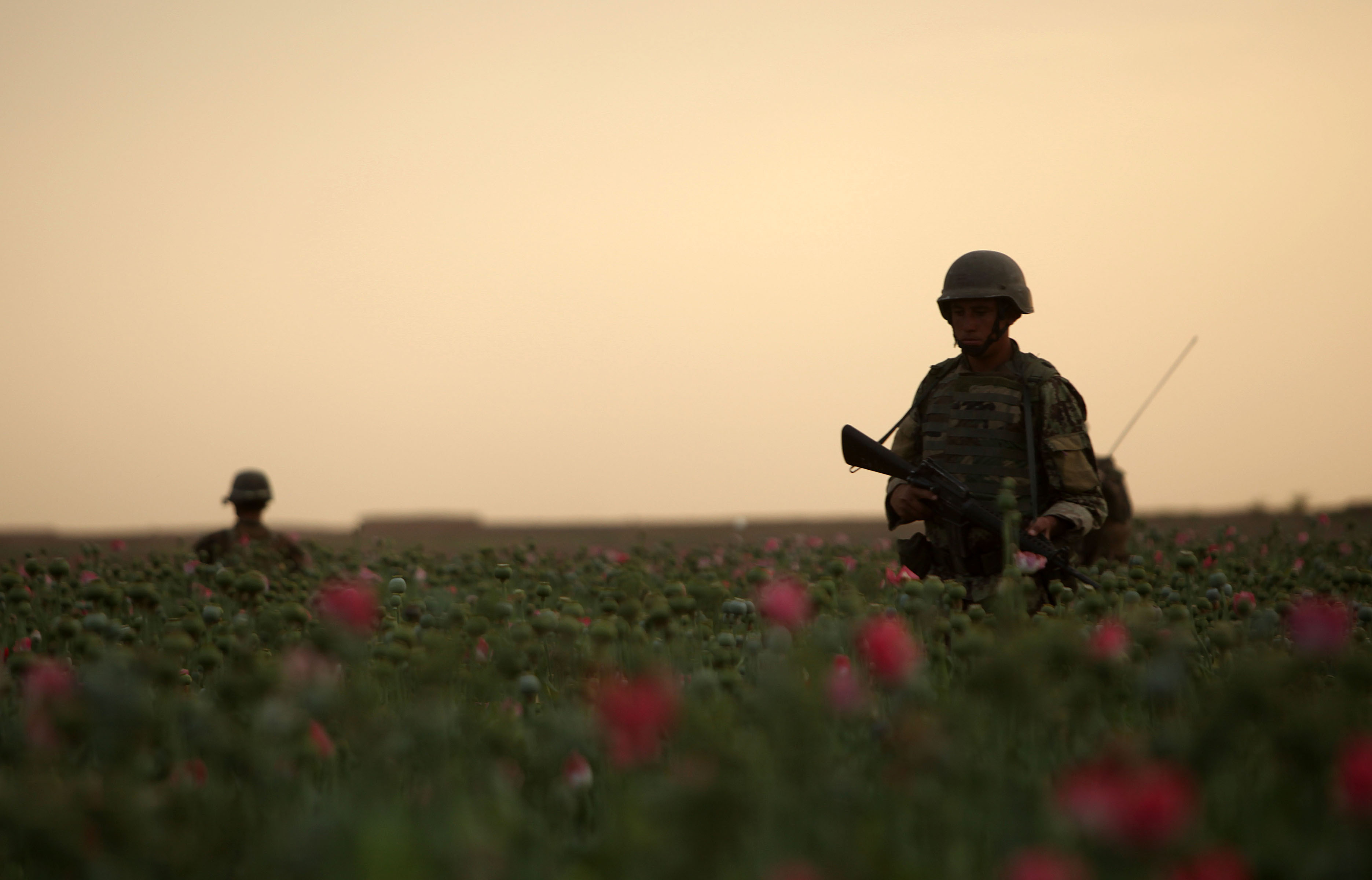 Afghan National Army (ANA) soldiers conduct a satellite patrol through a poppy field in Marjah, Afghanistan, April 17, 2012. (U.S. Marine Corps photo)