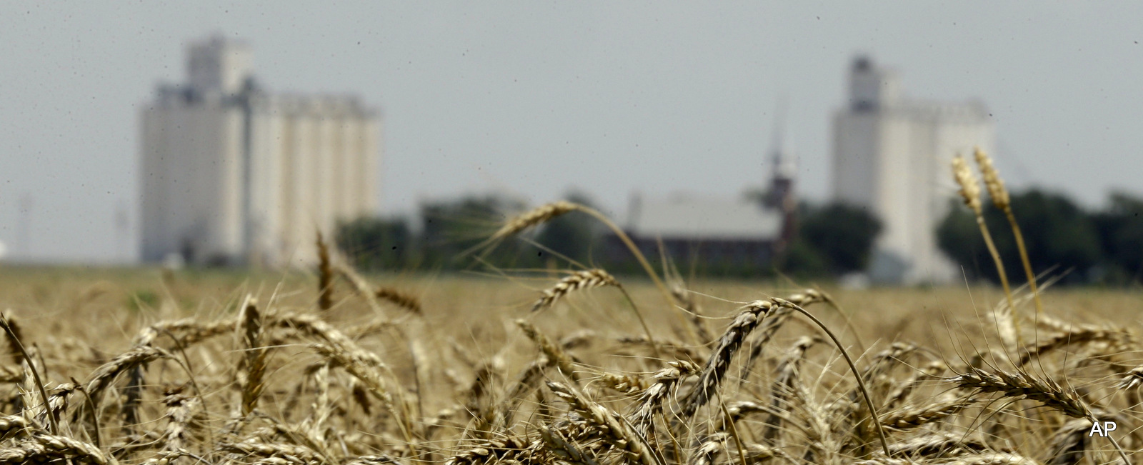 Wheat stands ready for harvest in a field near Anthony, Kan. Wheat stands ready for harvest in a field near Anthony, Kan.