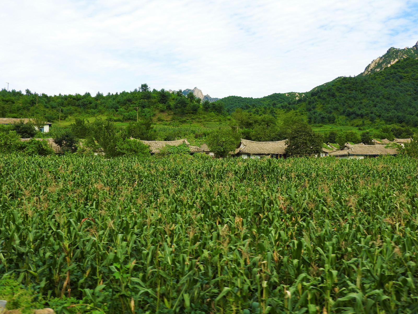 North Korea has suffered harsh periods of drought and starvation. The long-imposed brutal U.S. sanctions and destruction of the country don't help matters. Yet, traveling over a hundred kilometers south from Pyongyang, we passed endless lush fields of corn and rice.