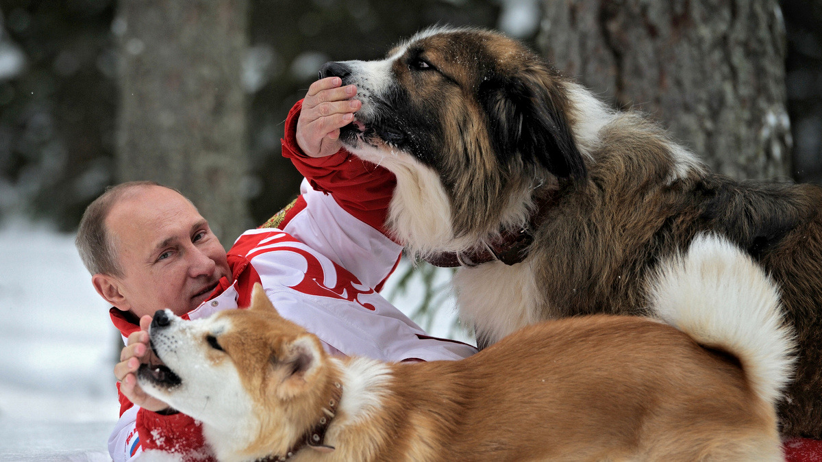 Vladimir Putin poses for the camera as he plays with his dogs Yume, an Akito-Inu, front, and Buffy, a Bulgarian Shepherd in an undisclosed location of Moscow region.(AP/RIA Novosti, Alexei Druzhinin)