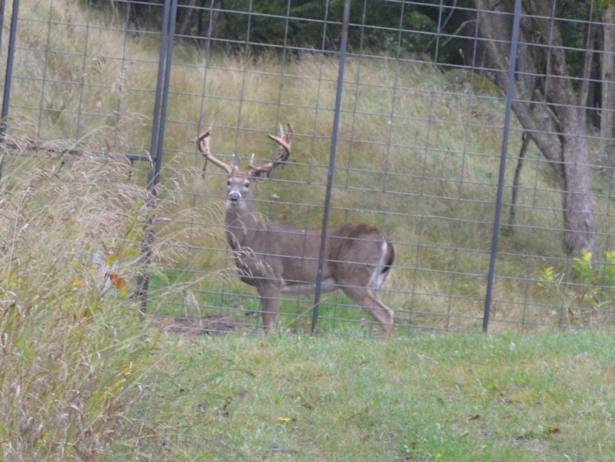 The 'Canned Hunting' Business Is Alive And Well In America