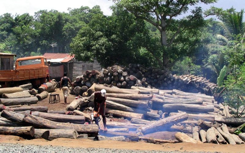 UN Holds First-Ever 'Wildlife' Day, Calls Attention To Illegal Logging Trade