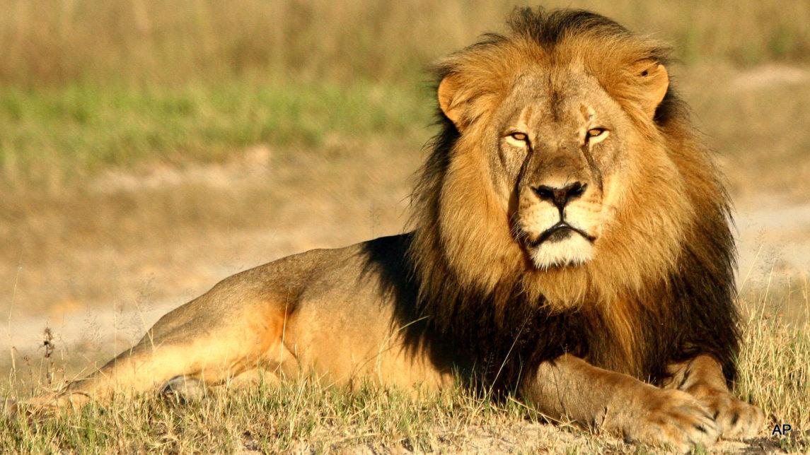 As The World Mourned Cecil The Lion, Five Of Kenya's Endangered Elephants Were Slain