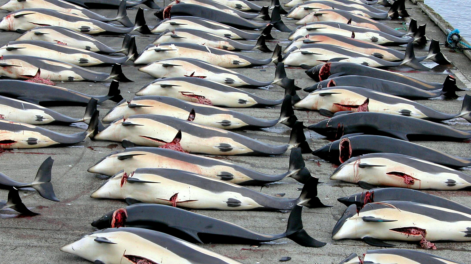 Norway Now Kills More Whales Than Japan And Iceland Combined