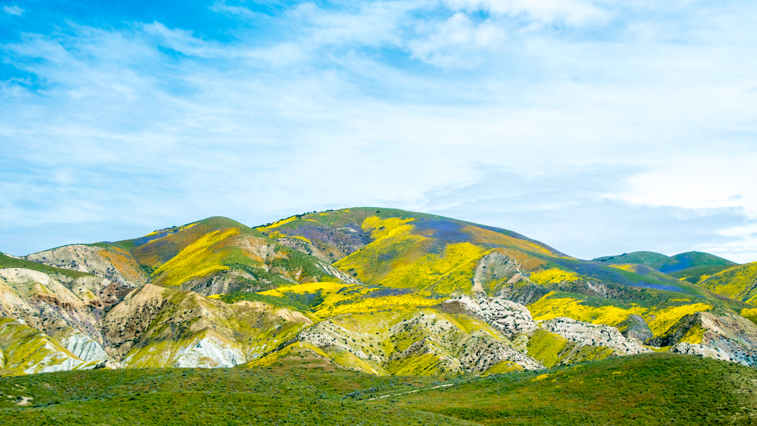 Wildflowers in bloom at Carrizo Plain in springtime. Photo: Douglas Croft / BLM