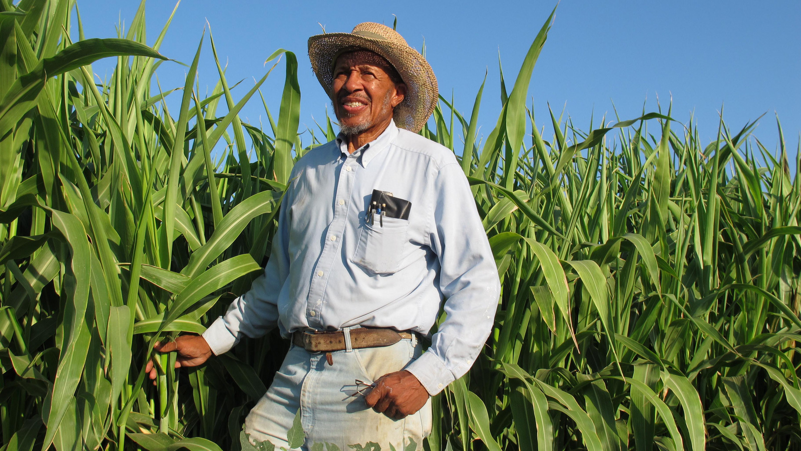 Will Scott, president of the African American Farmers of  California, poses for a photo by the sorghum plants at the group's demonstration farm in Fresno, Calif. on Thursday, September 15, 2011.  (AP/GosiaWozniacka)