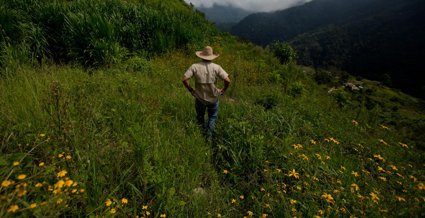 """Cómo GMO Seeds y el """"RoundUp"""" de Monsanto / Bayer están impulsando la política estadounidense en Venezuela"""